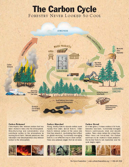 Forest & Climate Change